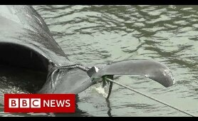 Where whales are back on the menu - BBC News