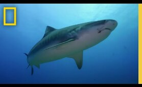 Could Sport Fishing Cause Shark Attacks? | When Sharks Attack: Tropical Terror