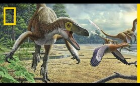 Dinosaurs 101 | National Geographic