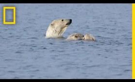 Polar Bears Practice